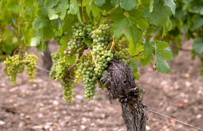 Weinregionen Aragon und Rioja