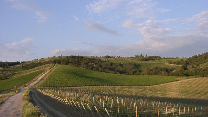Weinbaugebiet Toskana – ein Überblick