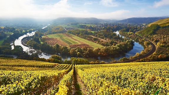 Weingüter Rheinland-Pfalz