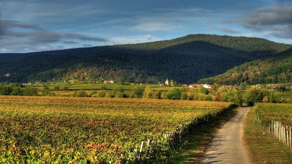 Die Pfalz – ein Überblick
