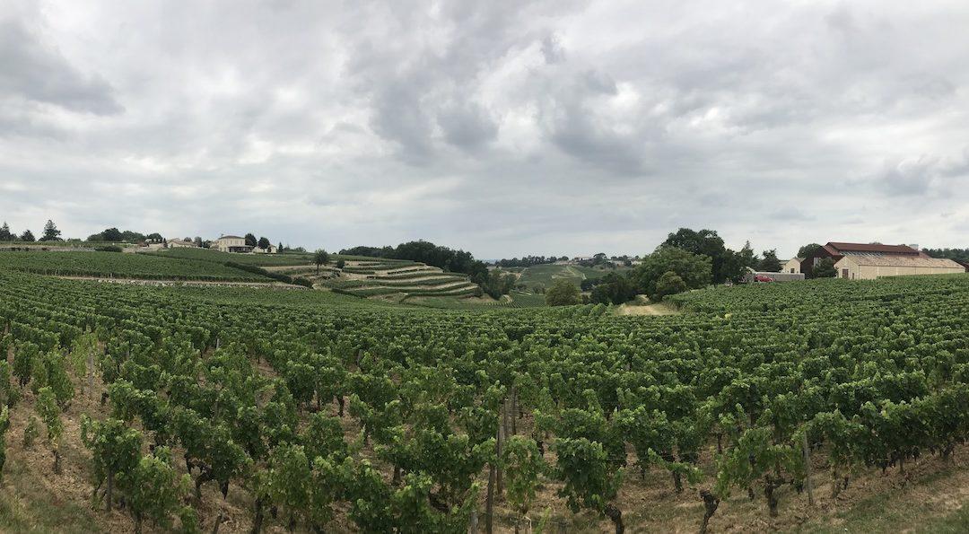 Chateau Tour Saint Christophe 2016 – endlich wieder verfügbar!