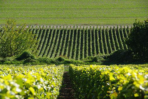 Weinregionen Burgund und Champagne