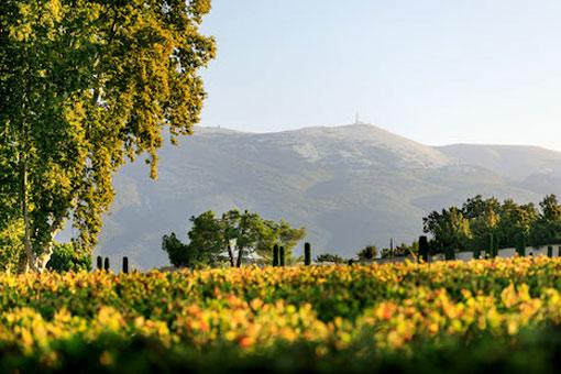 Weinbaugebiete in der Region Rhone
