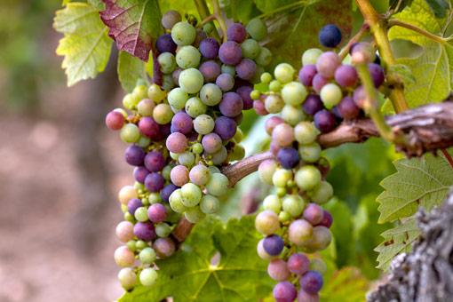 Weinbaugebiete Georgiens