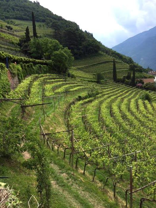 Weinbaugebiete in der Region Washington