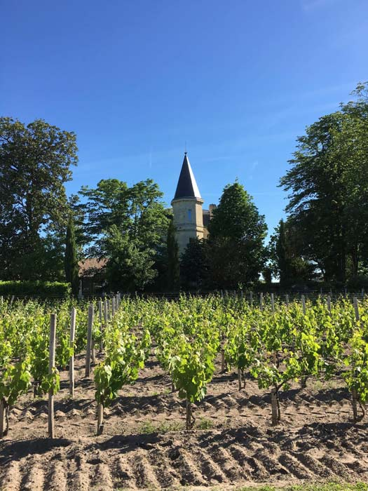 Weinbaugebiete in der Region Navarra