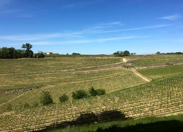 Weinbaugebiete in der Region Niederösterreich