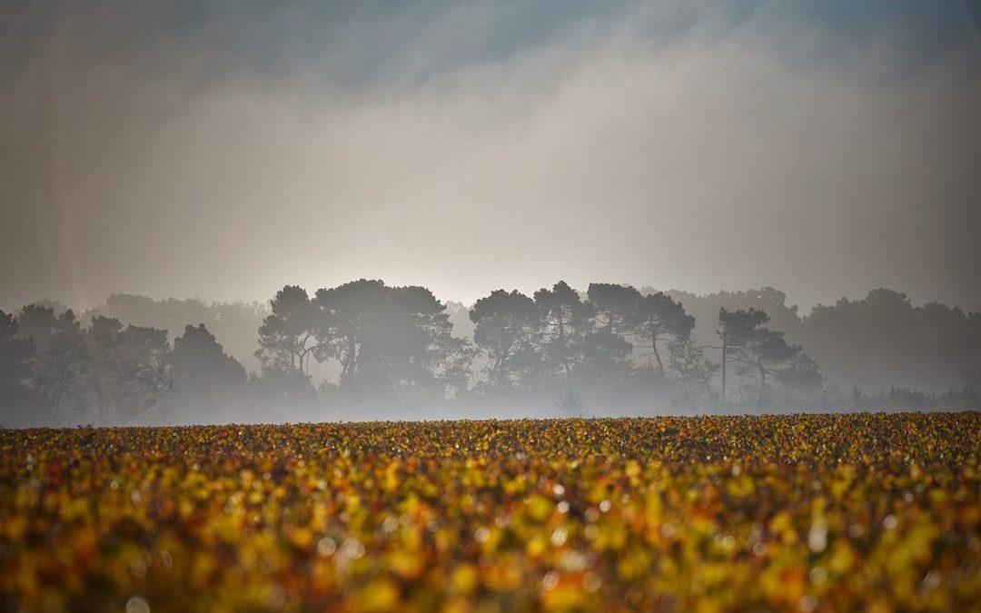 Sauternes – Erzeugung und Speisenbegleitung