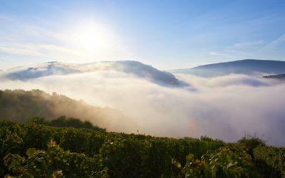 Weingut Korrell Nahe – mit klarer Vision zu großen Weinwerten