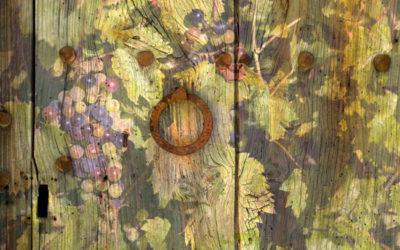 Das große Cabernet Sauvignon-Kaleidoskop